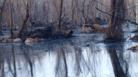 Oil covers the water and underbrush in Dawson Cove on April 6.